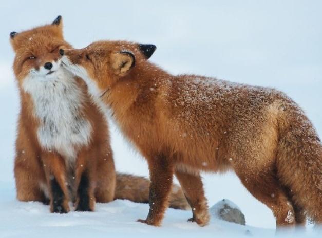 دنیای حیوانات در روز ولنتاین