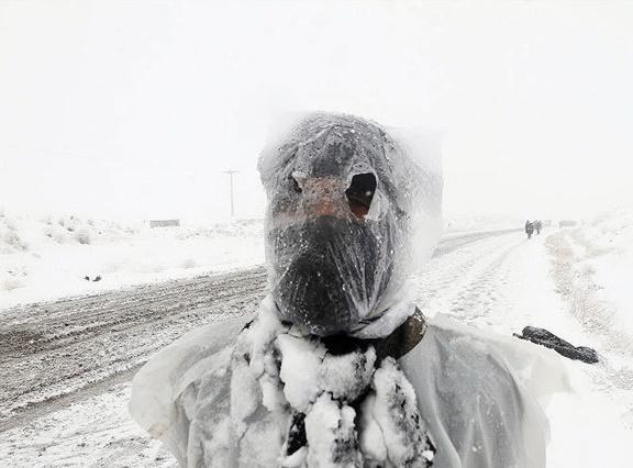 تصاویری از زائران پیاده امام رضا(ع) در برف