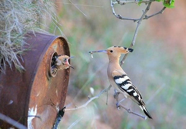 عاشقانهای از جنس پرندگان + تصاویر