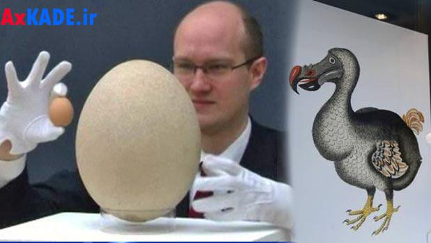 بزرگترین تخم پرنده