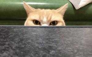 گربه ای که با هیچکس شوخی نداره!