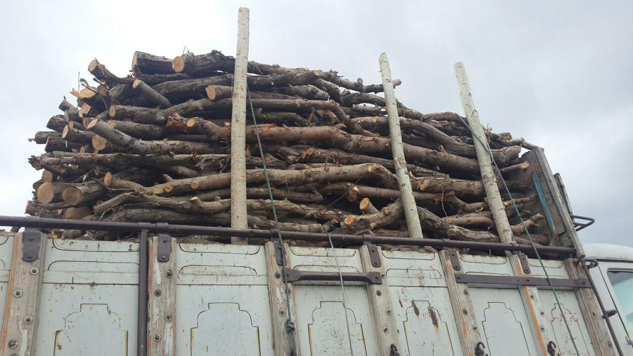 قیمت چوب زیتون