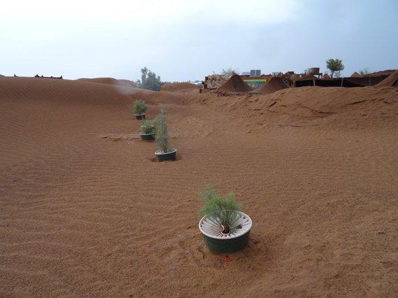 درختکاری بدون آبیاری