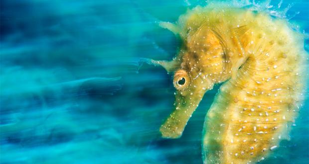 تصاویری از اعماق دریا که شما را شگفت زده خواهند کرد