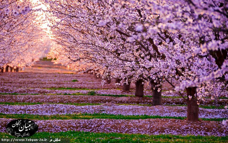 شعر تاتی به نام عید و بهار