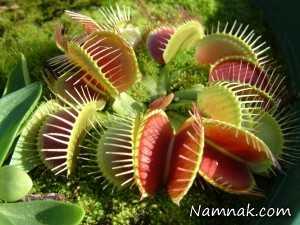 عجیب ترین و ترسناک ترین گیاهان دنیا + تصاویر