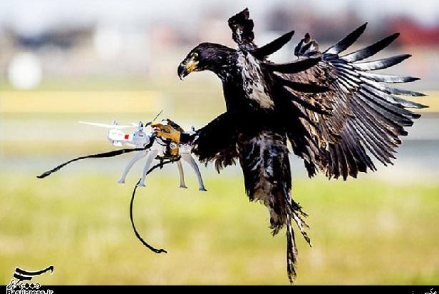 رکب خوری از نوع عقاب