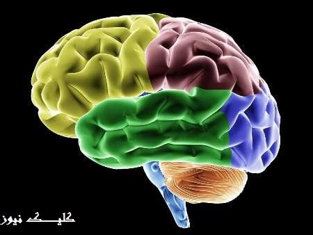 بالا رفتن از پله های جوانی مغز و محافظت از آن