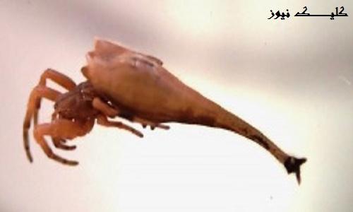 تصاویر جالب از عجیب ترین عنکبوت های دنیا
