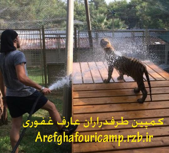 عکسی از اجرای عارف در ایران:به پرواز در آوردن یک تماشاگر