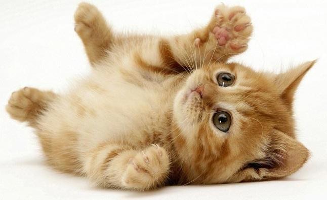 هفده مورد از وظایف بسیار جالب گربه ها!