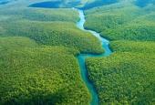 جنگل آمازون ، یکی از عجایب هفتگانه جهان + تصاویر