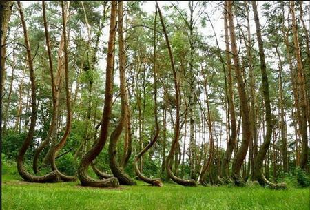 جنگل عجیب در لهستان