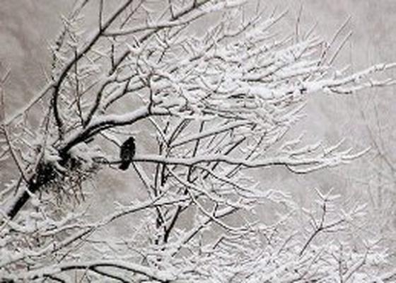 هشدار هواشناسی درباره بازگشت زمستان