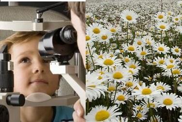 گیاهان دارویی مورد استفاده در چشم پزشکی