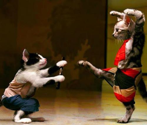 استیکر رقصیدن