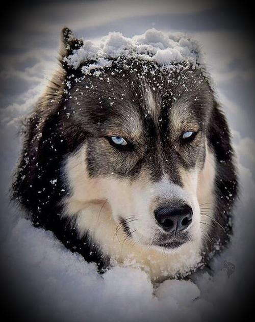 استیکر از گرگ