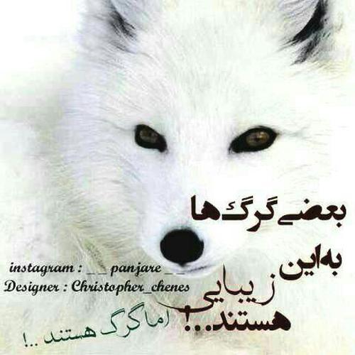 استیکرهایی درباره گرگ