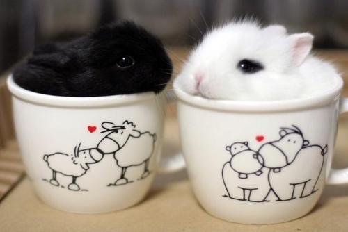 استیکر خرگوش تلگرام