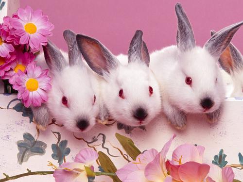 استیکر خرگوش لوس تلگرام