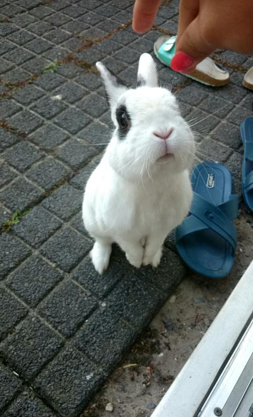 استیکر خرگوش چل تلگرام