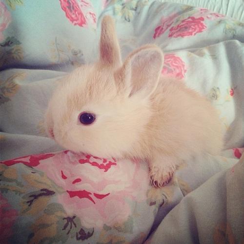 استیکر خرگوش خوشگل برای تلگرام