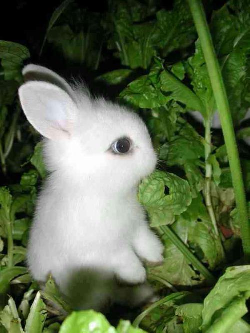 کانال تلگرام و استیکرهای جدید خرگوش