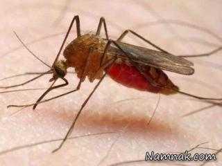 چی میشه که مالاریا می گیریم؟
