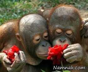 عکس های گل بو کردن حیوانات