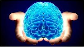 چرا مغز انسانها بزرگ است؟