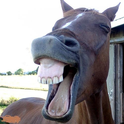 ببین چه دندون های خوشگلی دارم...دلت بسوزه