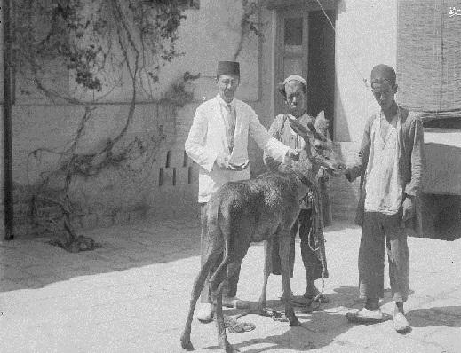 حیوان خانگی متفاوت در دوره قاجار+عکس