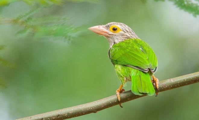 تصویر زیبای پرنده