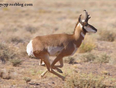 سریعترین جانوران جهان کدام است؟