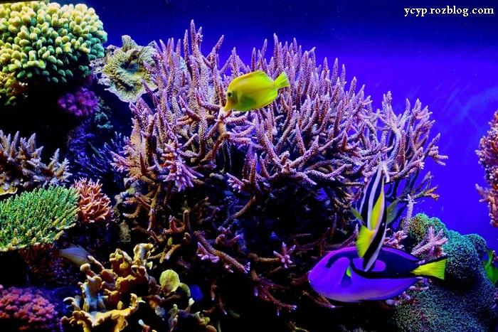 عکس های بسیار زیبا از موجودات زیر دریا