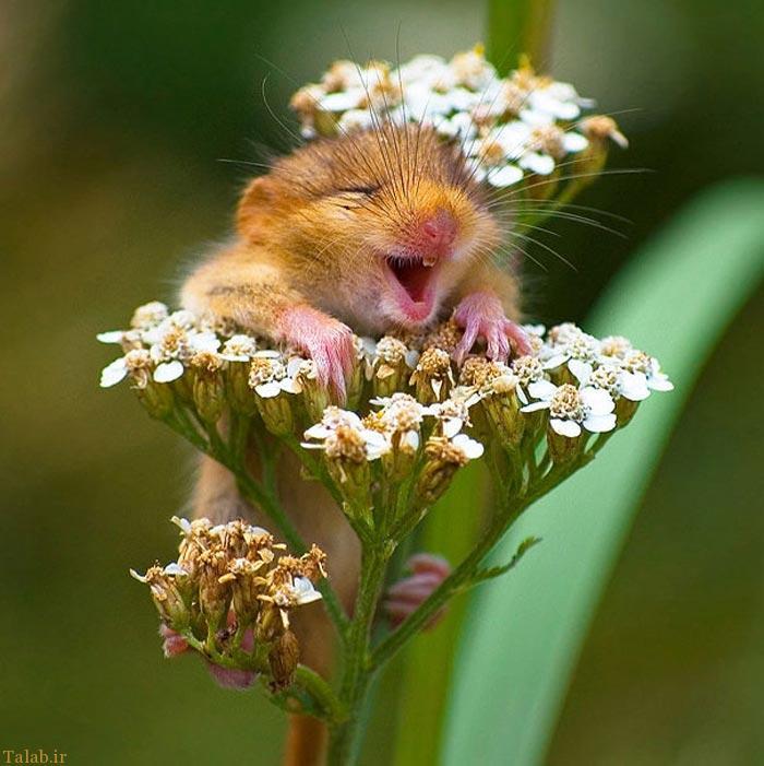 تصاویر جالب از لبخند حیوانات