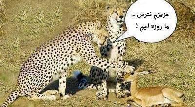 عکس نوشته خنده دار(2)