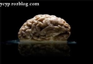 کلکسیونی از مغز انسان ها+تصاویر