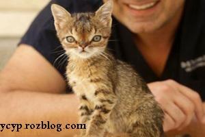 این گربه دچار بیماری نادری بنام سندروم داون می باشد