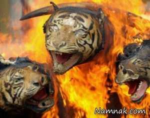 تصاویر روز سه شنبه 4 خرداد 1395