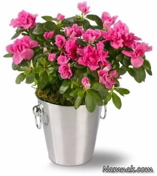 با این گلدان ها زیبایی آپارتمان دو برابر میشود