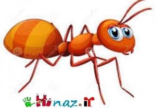داستان مورچه