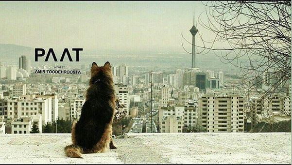 دانلود فیلم جدید ایرانی پات