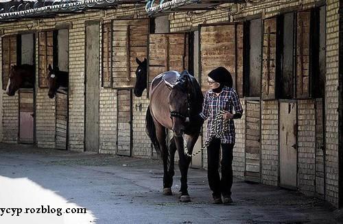 تنها زن ایرانی نعلبند اسب را بشناسید (+عکس)