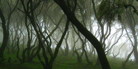 زیباترین جنگلهای ابر دنیا