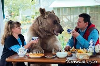زندگی زوج روسی با یک خرس ! + عکس