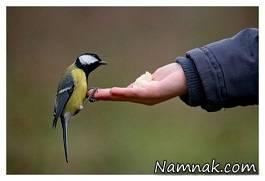 نحوه نگهداری حیوانات و رفتار با آنها در روایات معصومین