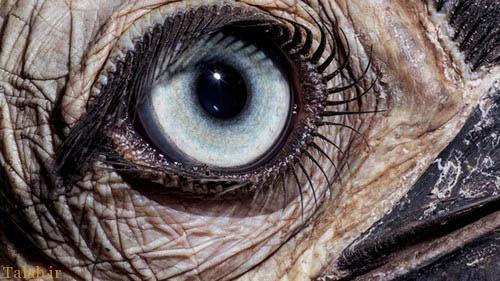 تصاویری دیدنی از چشم های حیوانات