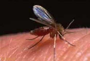 بهترین راه برای مقابله با حشرات چیست؟