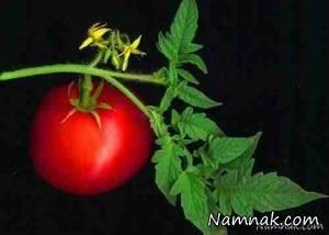 خوردن ریشه تا ساقه این 7 گیاه خطرناک است! + تصاویر
